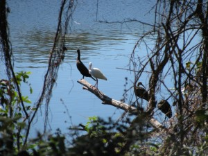 Mocasin Lake Park