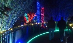 Florida Botanical Gardens Holiday Lights