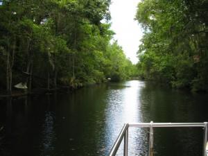 Homosassa Springs boat ride