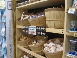 Seashells for sale