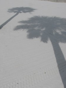 Palm shadows on the beach
