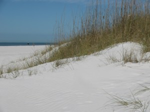 Clearwater Beach dunes and beach