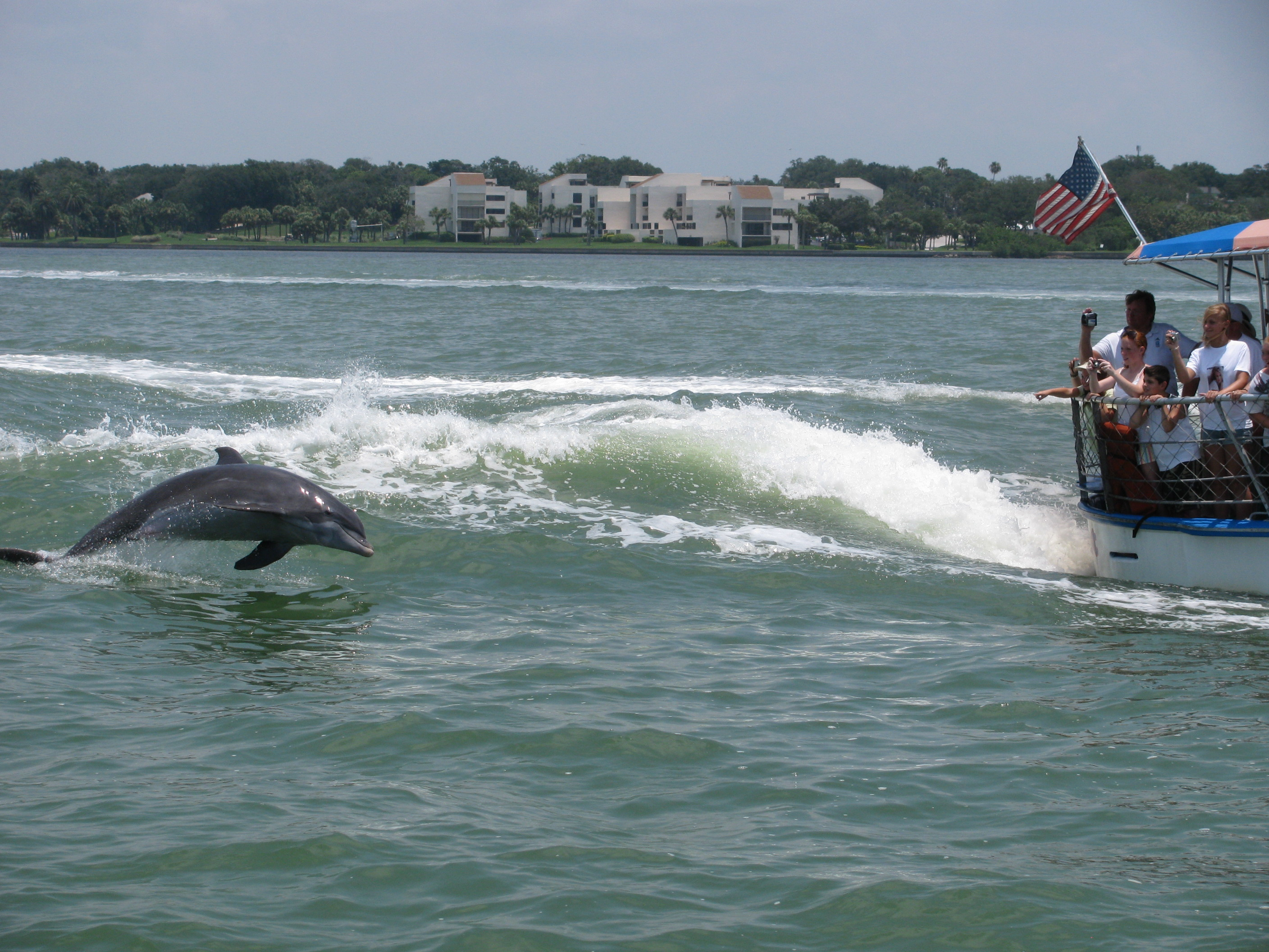 Dolphin Sighting Tours at Clearwater Beach