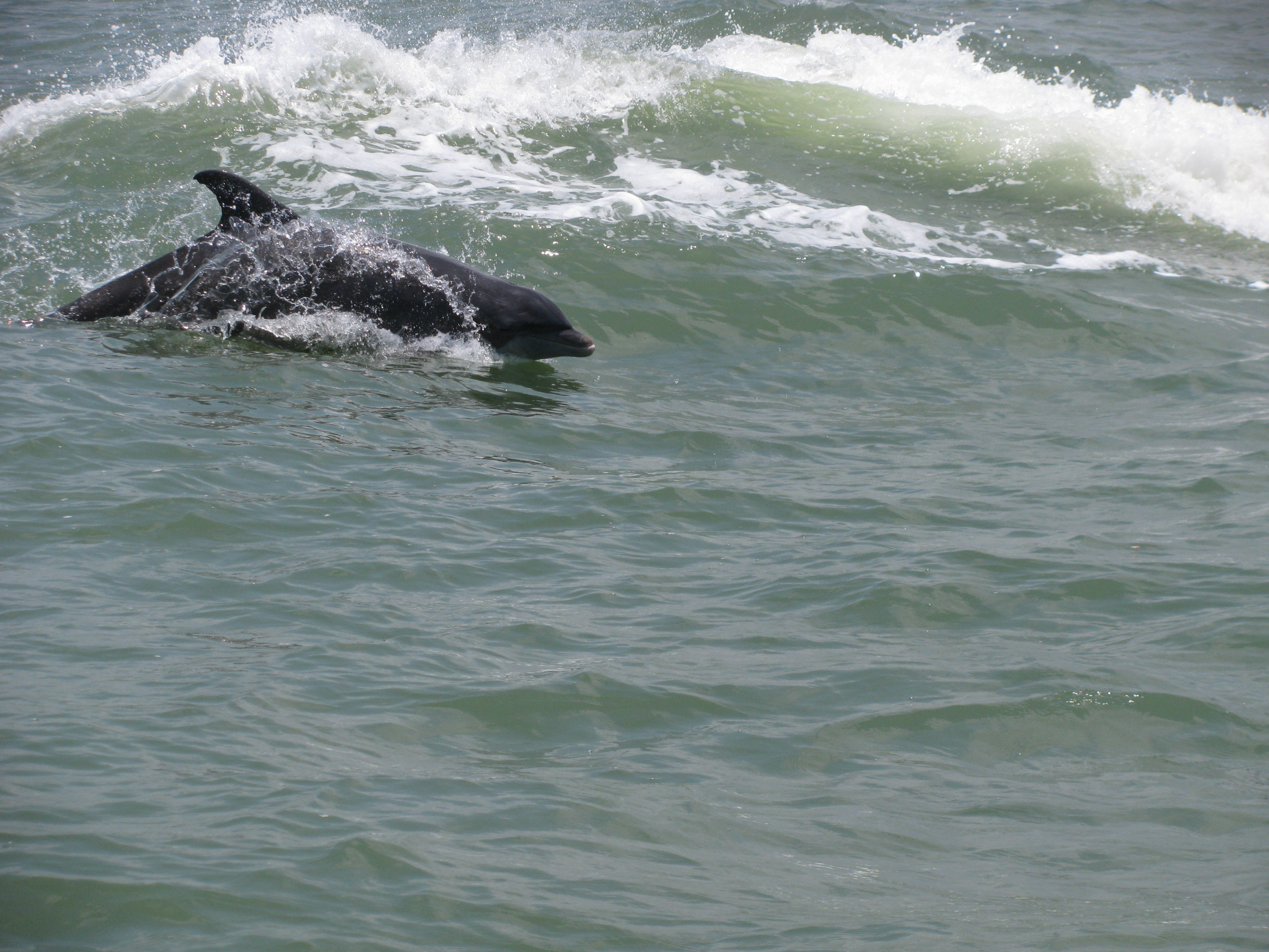 Beached dolphins - photo#47