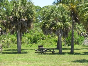 Picnic area Honeymoon Island State Park