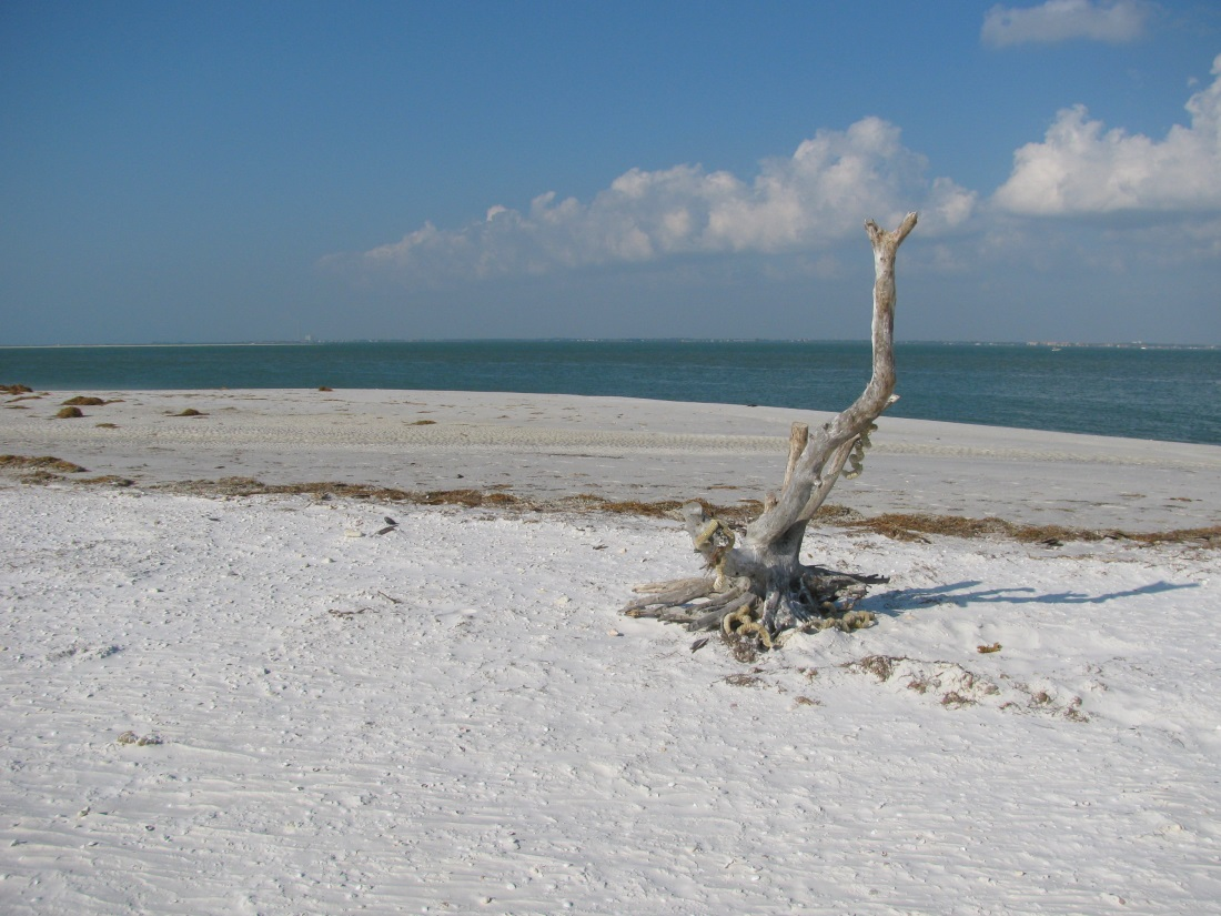 Beach Walk of a Lifetime at Honeymoon Island State Park