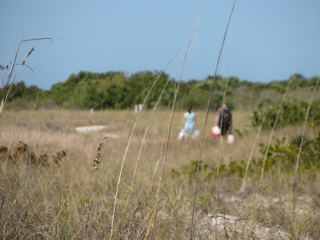 Southern Pleasures of Honeymoon Island State Park