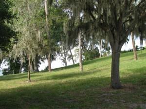 Safety Harbor Mound