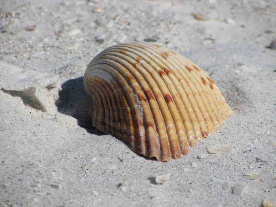 Remarkable Origin of Clearwater Beach Sand