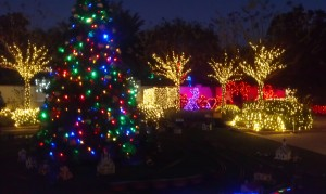 Holiday Lights in the Gardens
