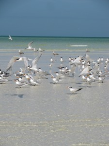 North Sandbar of Anclote Key