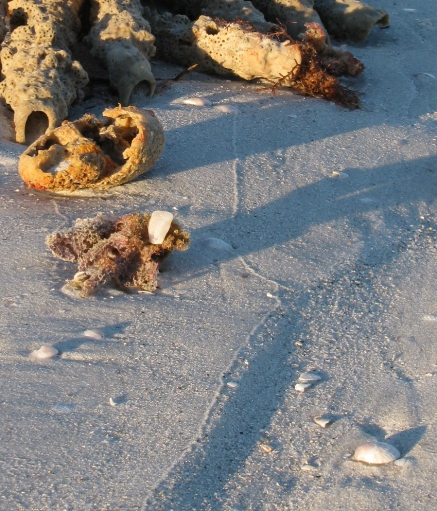 Sponges on Clearwater Beach