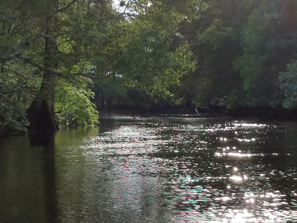 Sun reflected off the Withlacoochee River in Florida