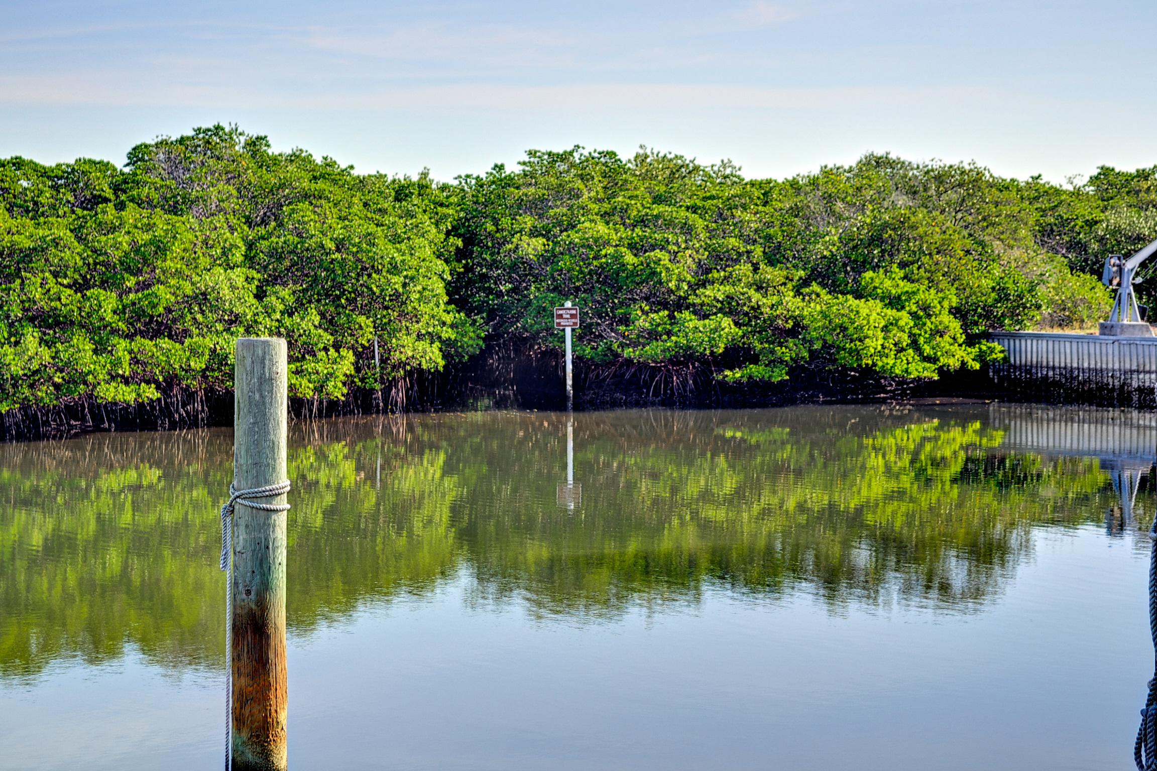 Life among Florida Mangroves
