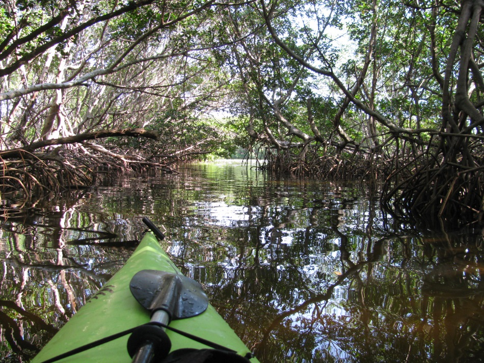 weedon-island-kayaking