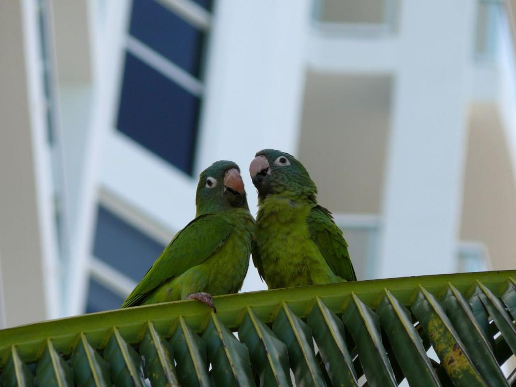 Florida has Parrots?