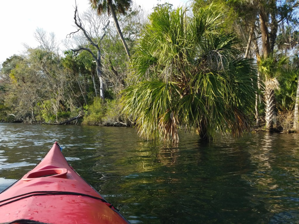 Kayaking the Chassahowitzka River