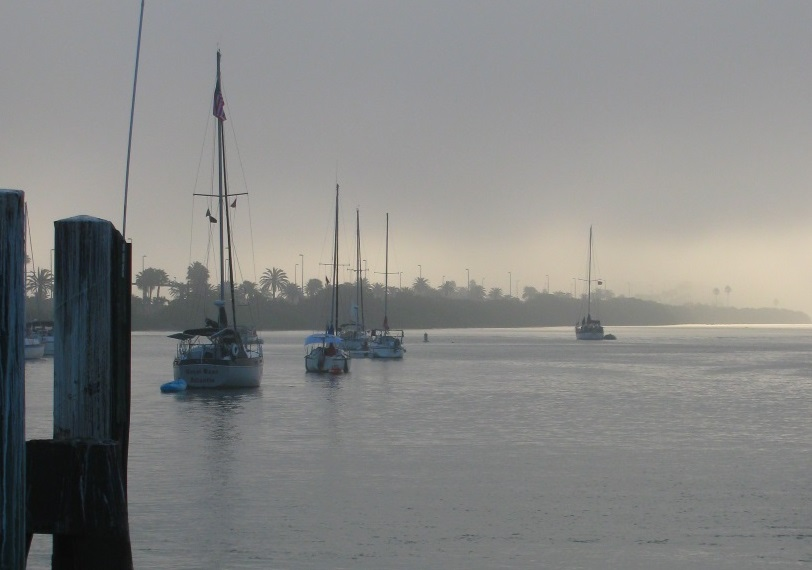 Sailboats in Clearwater Harbor
