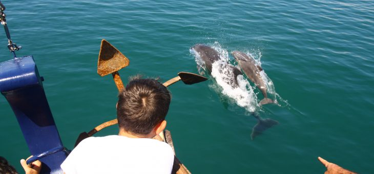 Dolphin Calving Season on the Florida West Coast