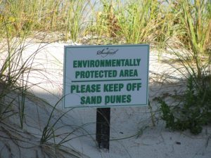 Clearwater Beach dunes