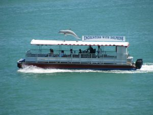 Dolphin encounter boat