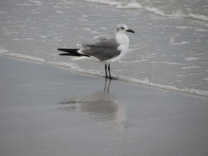 Clearwater Beach (172)