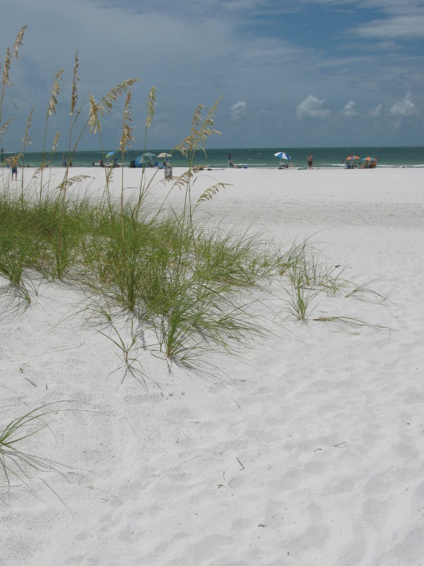 Wild Islands Of The Central Gulf Coast Of Florida