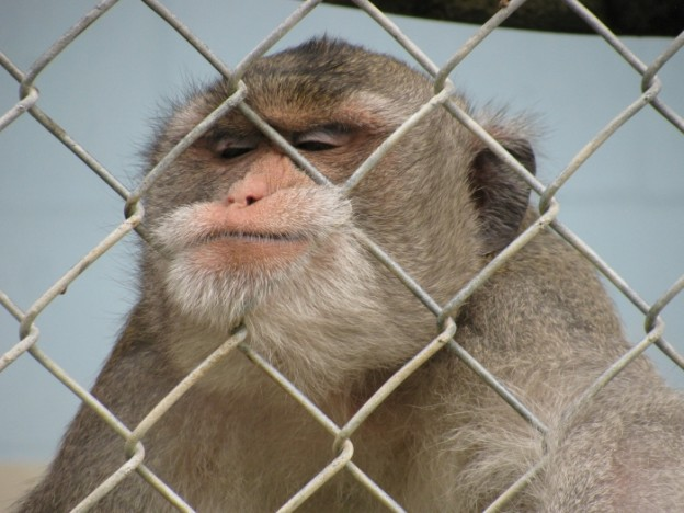 Monkey at the Suncoast Primate Sanctuary