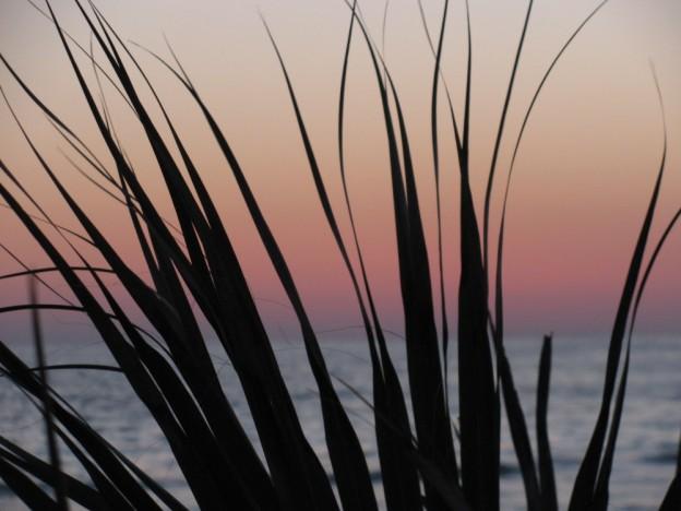 Honeymoon Island of the Florida Gulf Coast.
