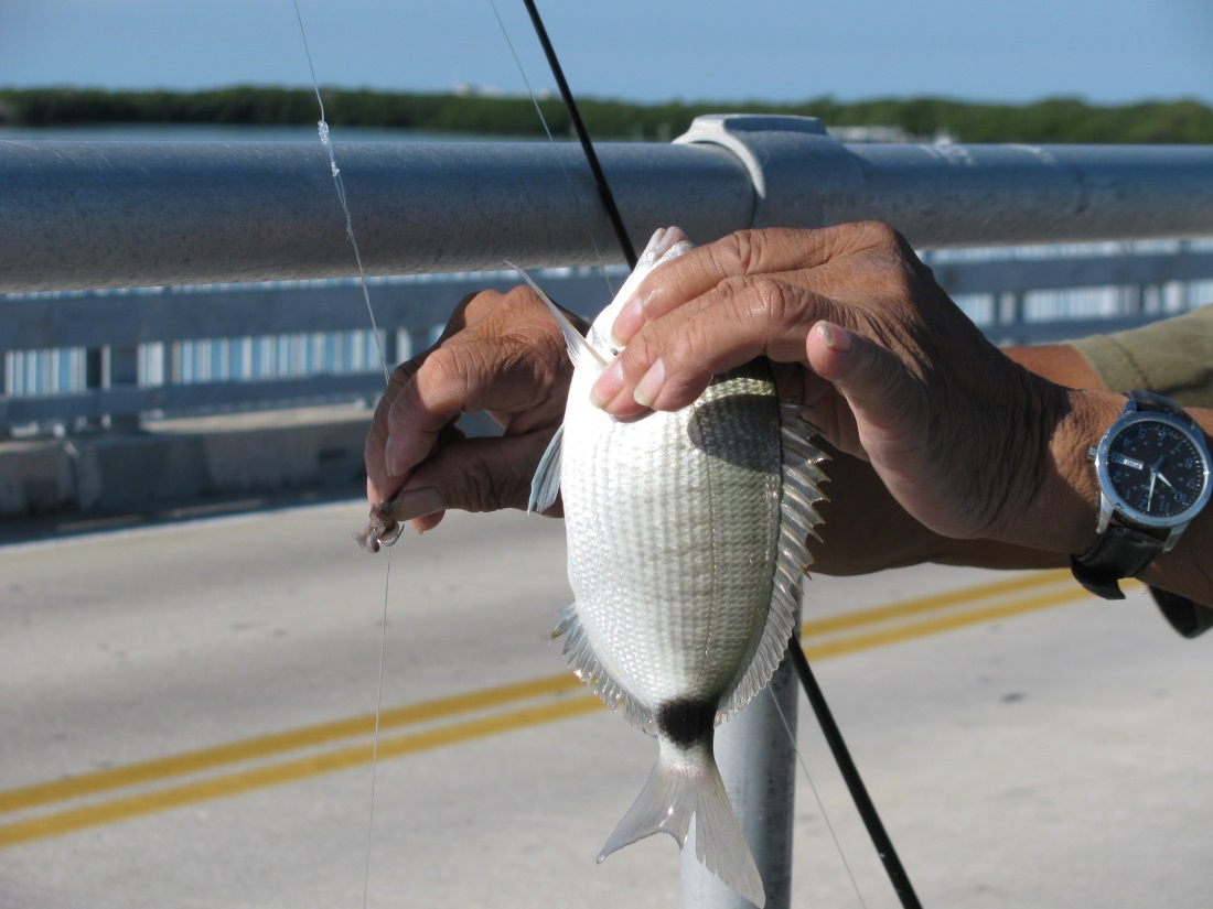 Fishing charter hotspots on the florida gulf coast for Florida gulf fish