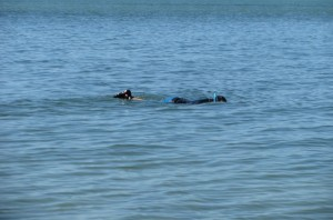 Snorkeling Florida