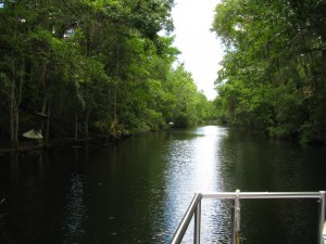 Homosassa Springs boat ride