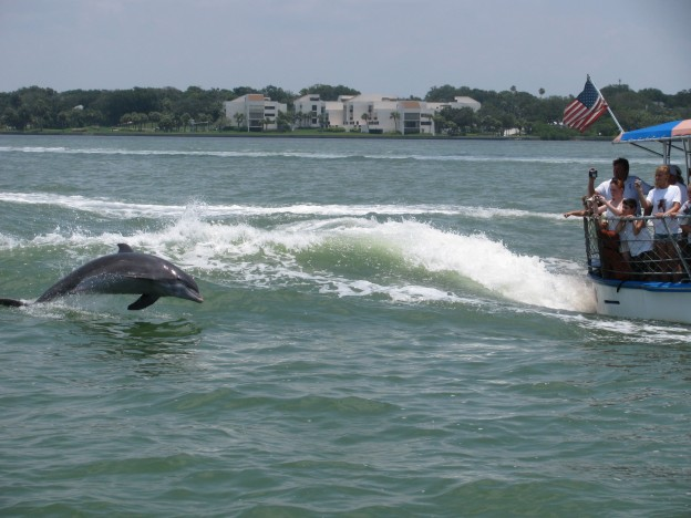 Clearwater Beach dolphin sighting tours