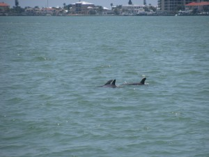 Dolphin sightings