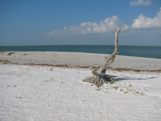Honeymoon Island Florida