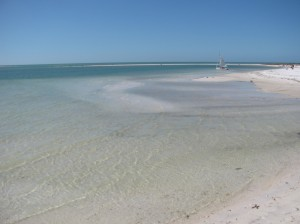 Cove at Honeymoon Island
