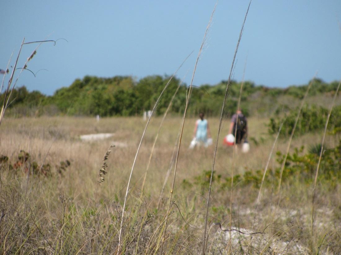 Southern Pleasures of Honeymoon Island State Park