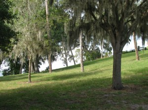 Safety Harbor Mound