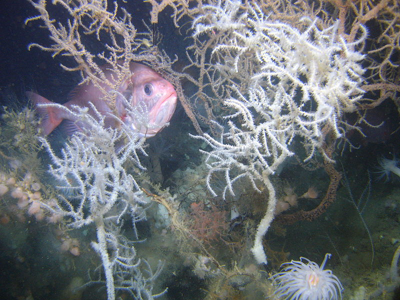 Discovering the Artificial Reefs of the Florida Gulf Coast
