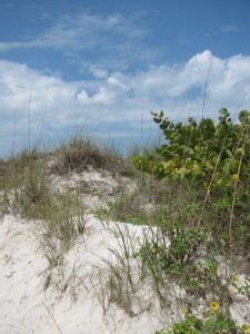 Clearwater Beach sand dune