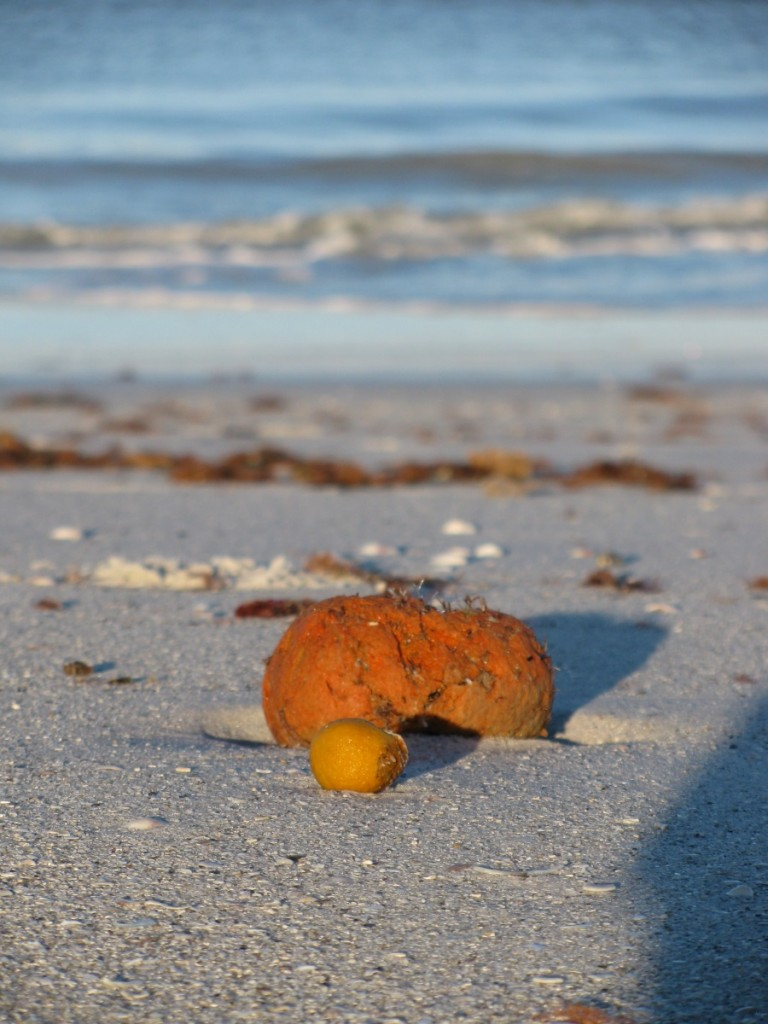 sponge on beach