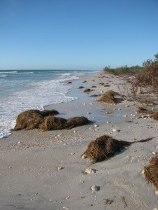 Honeymoon Island beach walk