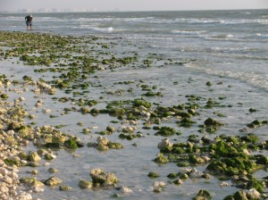 Coral rock beach