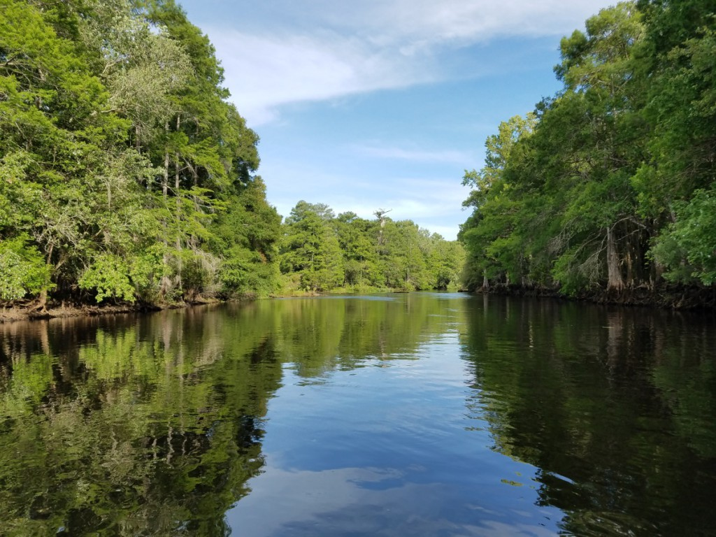 Calm waters of the Withlacoochee River